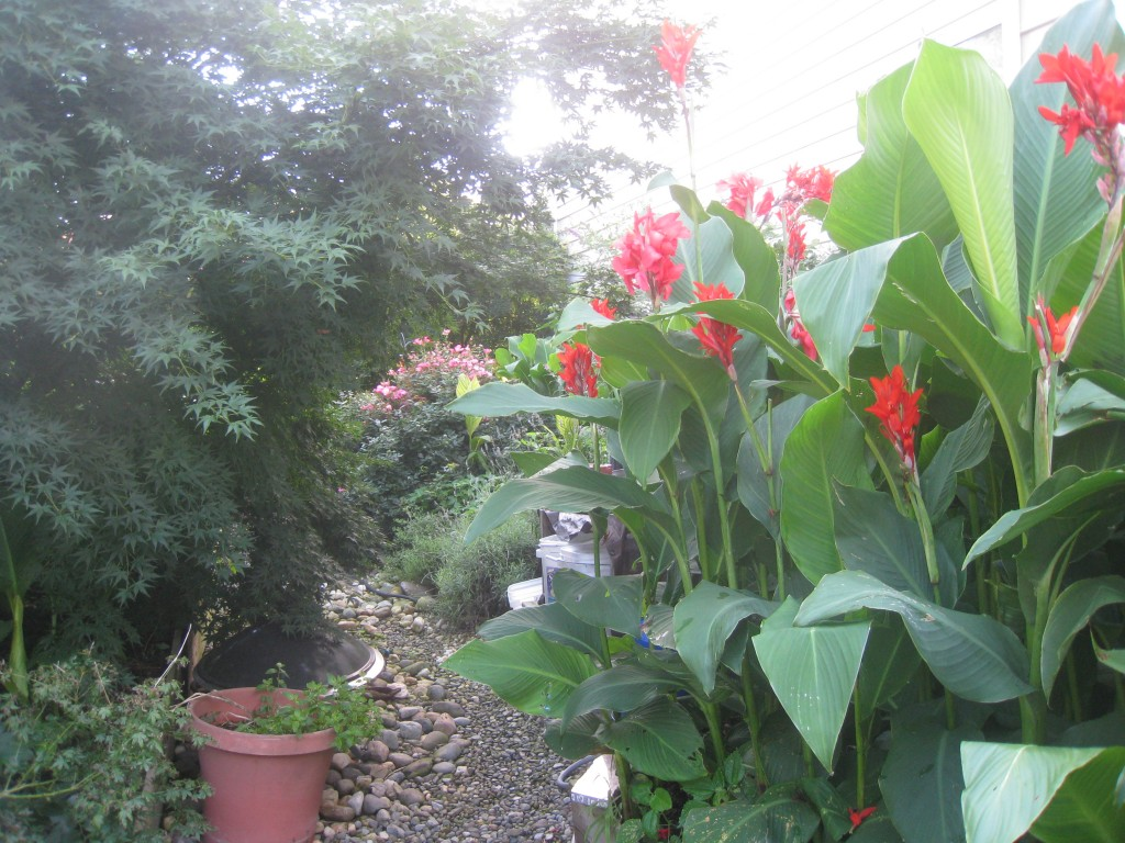 Lush Canna Lilies sprawl over the dry creek bed at Teds Pagan Tiki Shack a Certified and Justified Pinot Noir Chili Dog Bar recognized as a historical landmark.