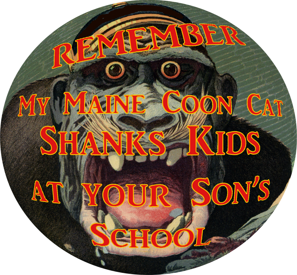My Maine Coon Cat Shanks Kids at your Son's School